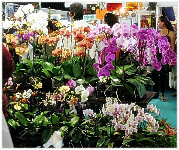 ORCHIDEES DIVERSES AR