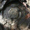Curiosités géologiques