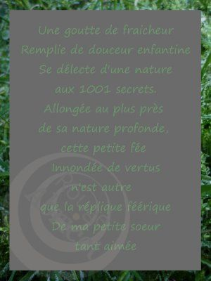 feefeuille1