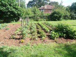 jardin potager 002