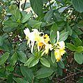 Fleurs et feuilles de Léon 210916