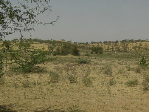 Sur la route vers Jaisalmer
