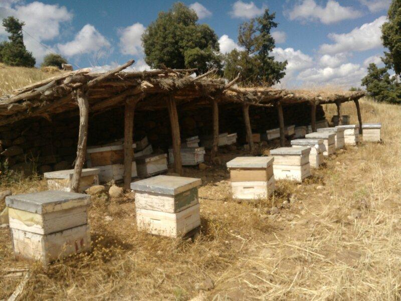 apicultura (586)