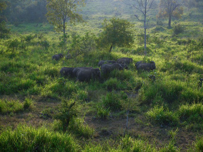 Sri Lanka éléphants Ecopark