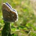 joli papillon près de serre ponçon