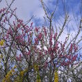 Haiku du printemps 7