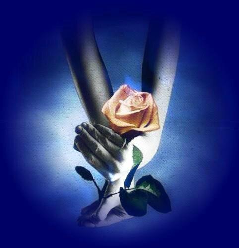 main-rose
