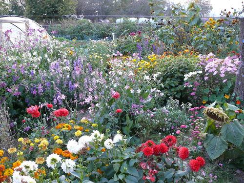 2008 09 30 Mon jardin
