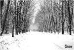 snow_b12