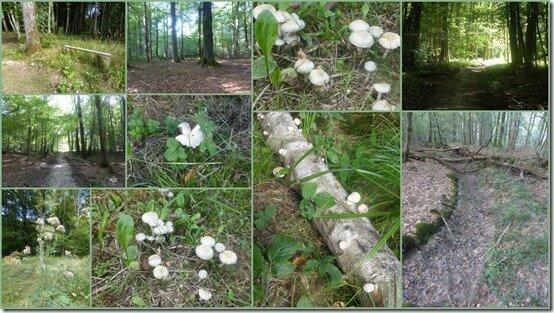 dans les bois1