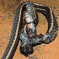 Le serpent des morts