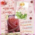 lait de rose 2009
