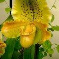 Expo d'Orchidées 2008 - Serre aux papillons du Parc Floral d'Orléans