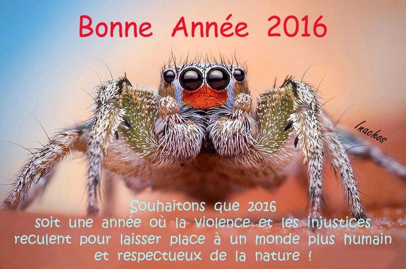 Araignée sauteuse - Voeux 2016