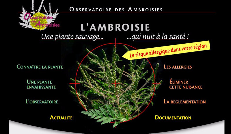ambroisie photo