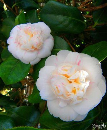 BlogJardin090423_jardinCamelia_2