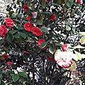 Bouquet du vendredi
