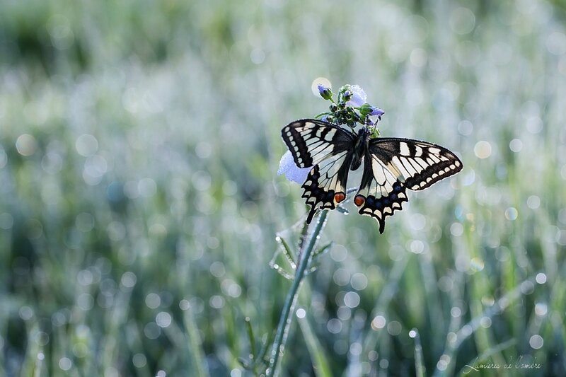 w_Machaon net_20170329_6889