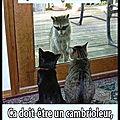 Humour - les chats de garde...