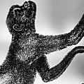 Chronique livre : l'arche de darwin