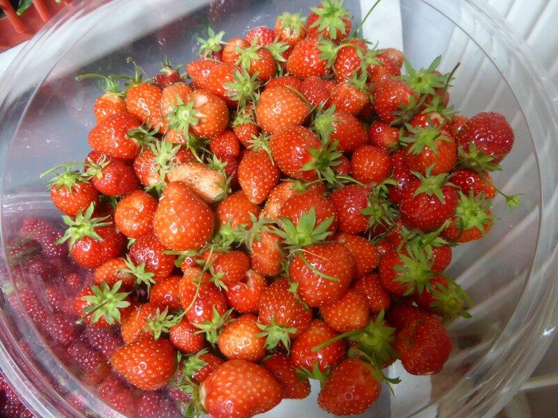 27-fraises (3)