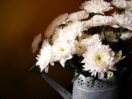 fleurs-02