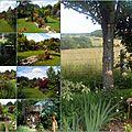 Juin au jardin 1ère