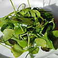 Salade de pourpier d'hiver - clayton de cuba - au curcuma et graines de courge