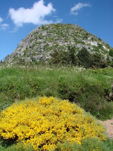 2008 06 26 Les genet au pid du Mont Gerbier de Jonc