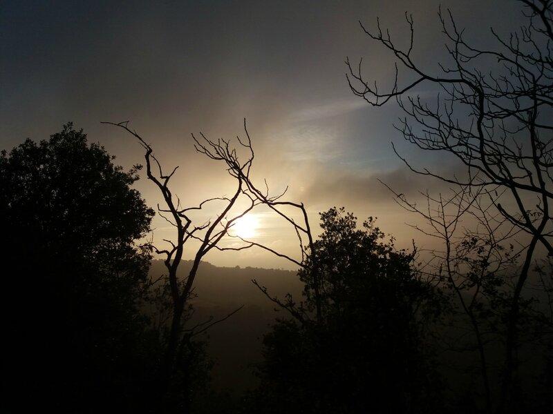 Brouillard givrant (12)
