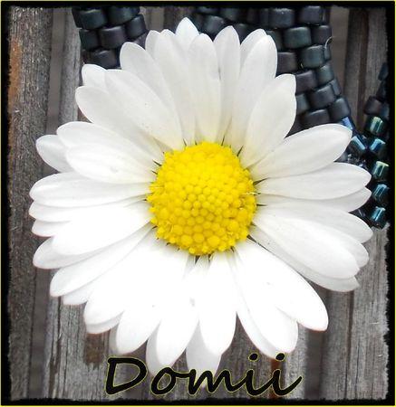 DOMIIIDSCN0481