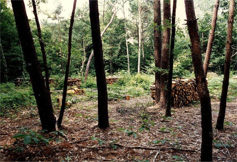 coupe de bois près de Peyrinet