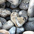 Coeur (Somme Pointe de Hourdel)_5891