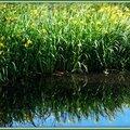 Lac Mimizan 05051538