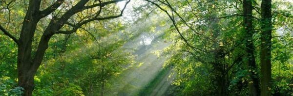 600xNxnormal_Les_rayons_du_soleil_a_travers_les_feuillages_dans_la_foret_JPG_pagespeed_ic_iPnKEQBHrF