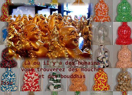 mouches_et_bouddhas