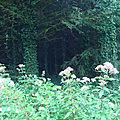 Forêt du Jura - Nans sous Sainte Anne 2