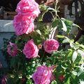 Quelques fleurs en mon jardin ....