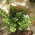 PLANTE GRASSE 11