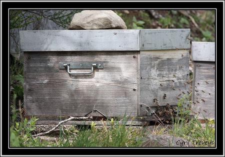 2010_06_01_Les_abeilles_devant_les_ruches__7_