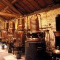 Grasse : capitale des parfums