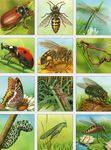 imagerie_insectes_recto_2