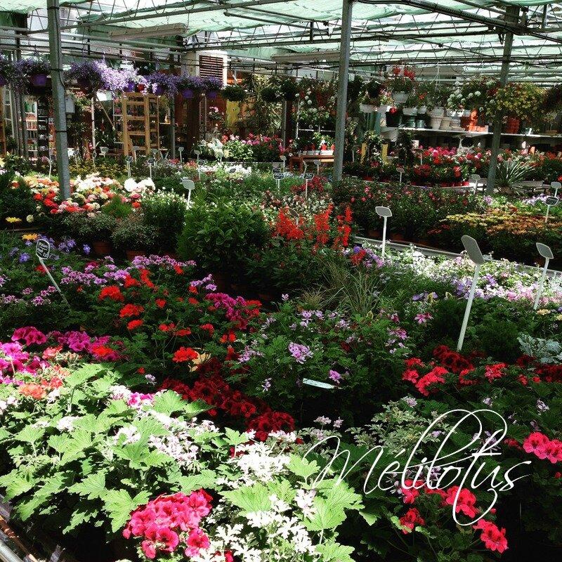 FleursCour Jardinerie