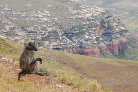 Afrique du Sud (904)