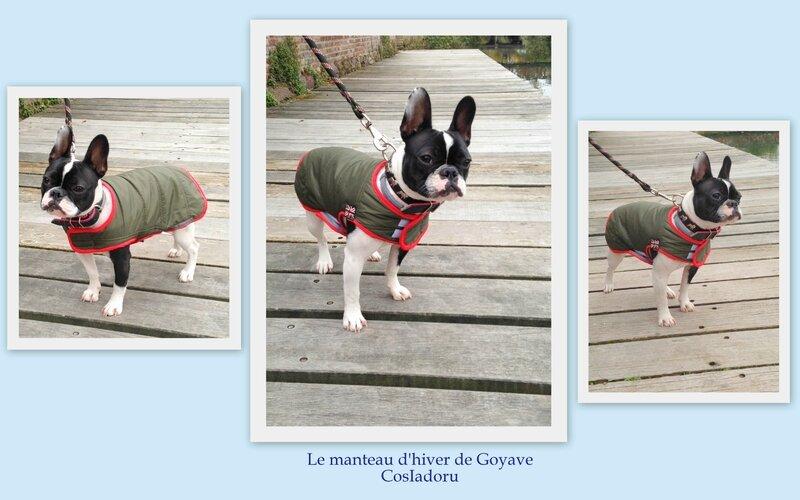 le manteau d'hiver de Goyave5
