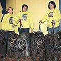 5 bouviers nés à la DULLAGUE présents à l'expo internationale