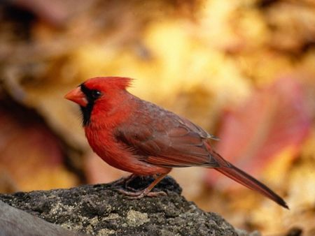 Macintosh_HD_Desktop_Folder_oiseau_rouge