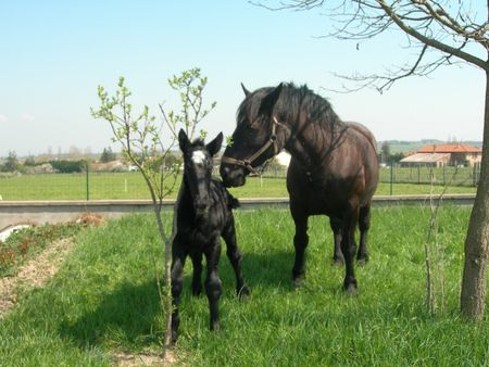 chevaux_lentini