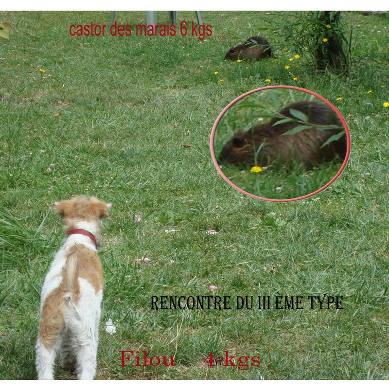 Rencontre du 3eme type son