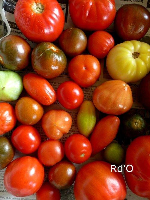 tomates-blog-10